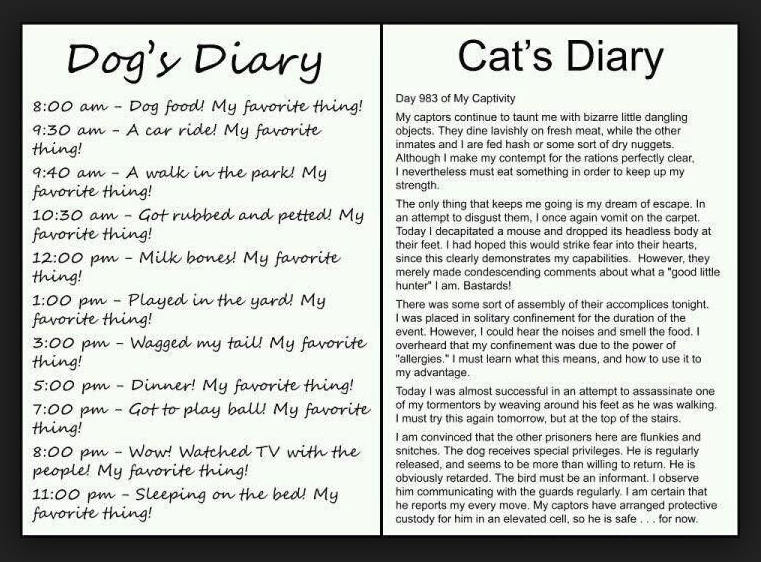 dogdiary-catdiary.png